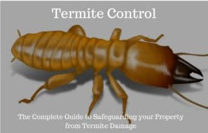best termite treatment