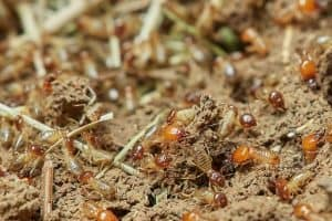 Termite Inspection Cost