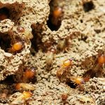 Subterranean Termites Treatment