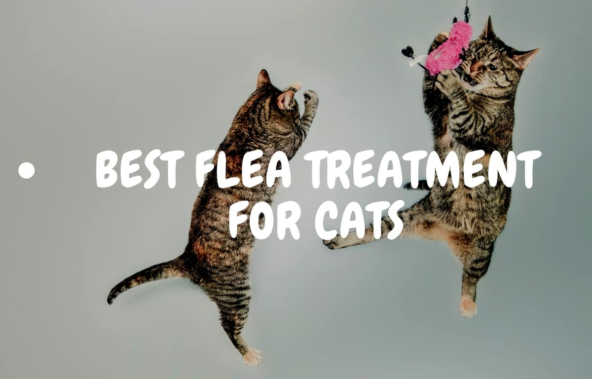 Best flea treatment for cats