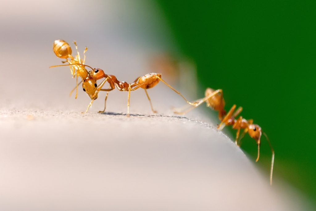 Top 7 Best Ant Killer for 2019 Reviewed