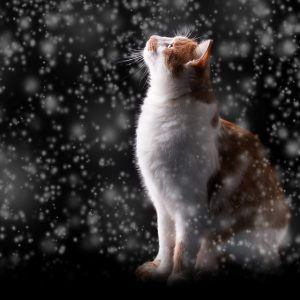 Can Cats get Fleas in the Winter