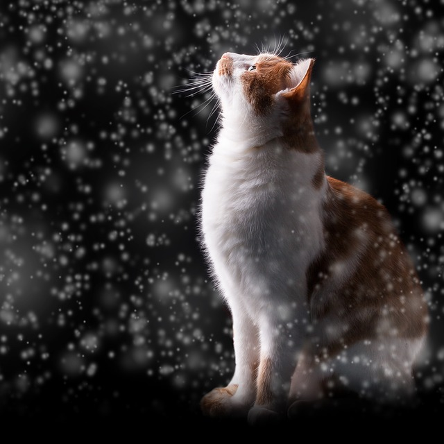 Can Cats get Fleas in the Winter?
