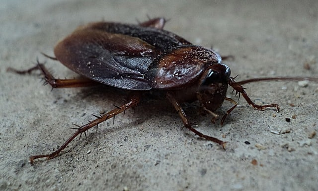 Do Cockroaches Bite Yes Dangers, Prevention Treatment