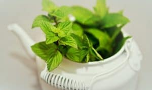 Does Peppermint Oil Repel Spiders