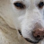 Is Borax Safe for Dogs
