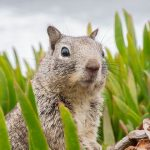 How Long Do Squirrels Live