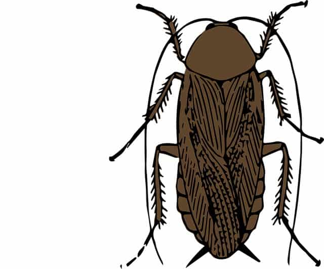What Animals Eat Cockroaches
